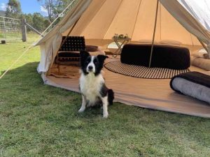dog sitting in front of hire party tent gold coast